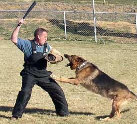 Get a Guard dog